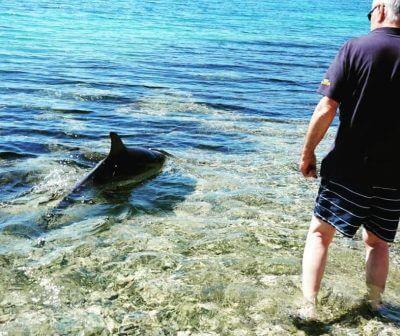 delfin jadransko more